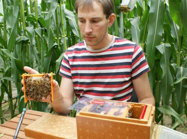 Удаление соты для оценки развития пчелиной семьи
