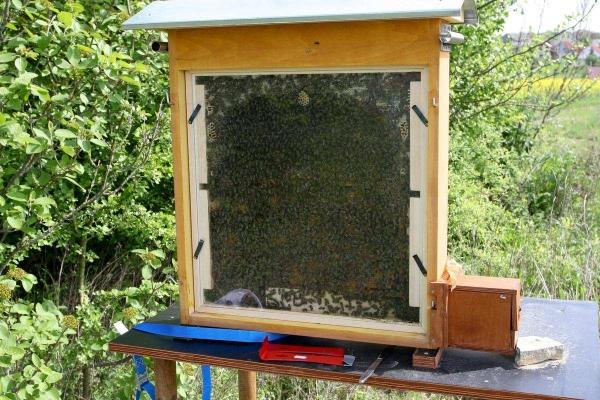 Анализ движений пчел, которые они используют, чтобы сообщить другим пчелам о месте с хорошей пищей