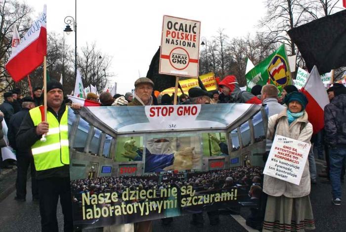 Фермеры выступают против ГМО
