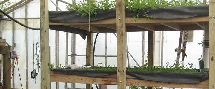 6aquaponics-farming