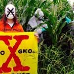 Фото. Они против ГМО