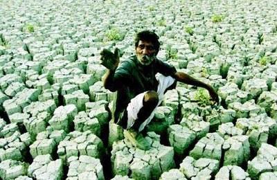 Фото. Поле после ГМО