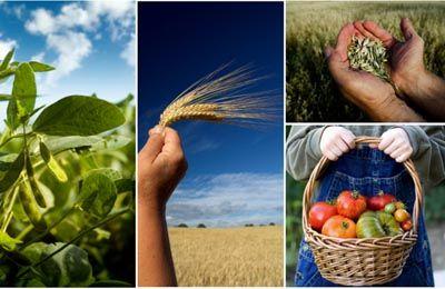 Фото. Риски ГМО