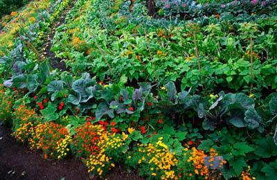 Фото. Выращивание ГМО