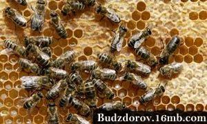 Фото. Пчелы