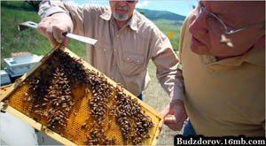 Фото. Изучение пчел