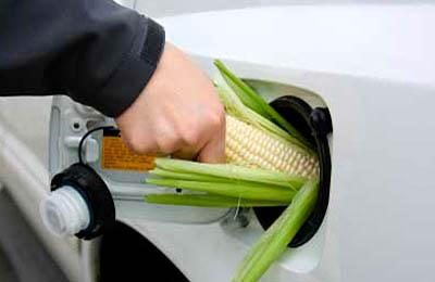 Фото. Топливо в виде кукурузы (ГМО)