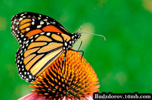 Фото. Бабочка