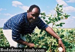 Фото. ГМО в сельском хозяйстве