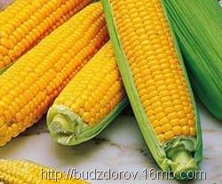 Фото. Кукуруза ГМО (NK603)
