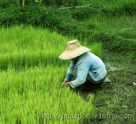 Фото. Засев ГМО
