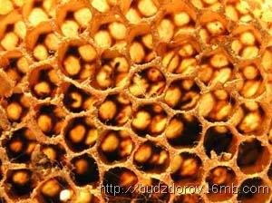 Фото. Пчелиные сота