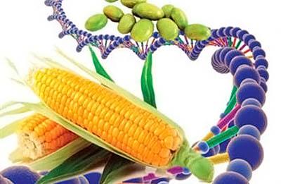Фото. Продукты с ГМО