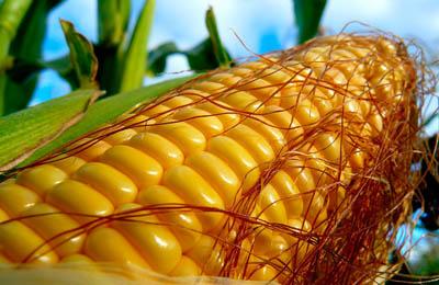 Фото. Германия и ГМО