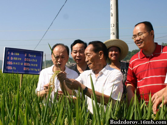 Китайское зерно (ГМО)