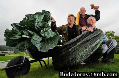 Сходил на огород, ГМО покопать