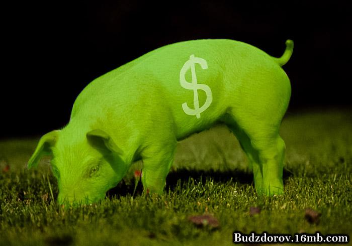"""свинка из ГМО - """"Enviropig"""""""