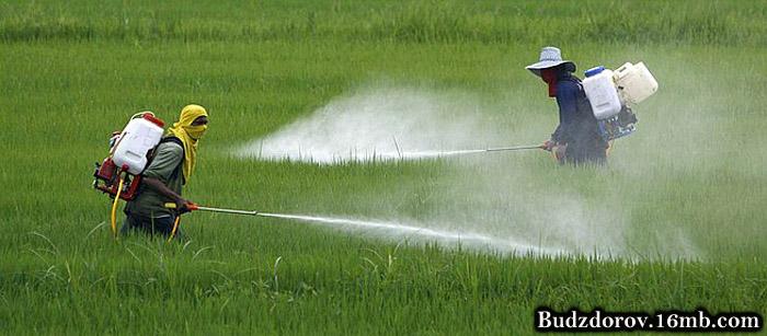 Фермеры распыляют пестицид