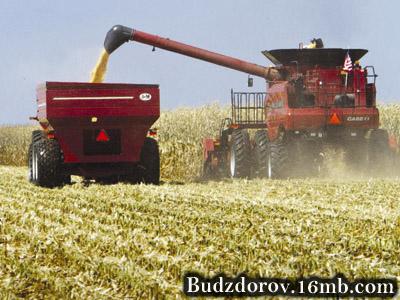 Более 90 процентов всех кукурузы выращенной в США - генетически модифицирована