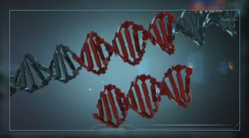 Праймеры и ДНК