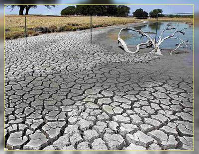Засуха - нерешенная проблема ГМО
