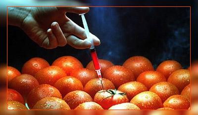ГМО помидоры