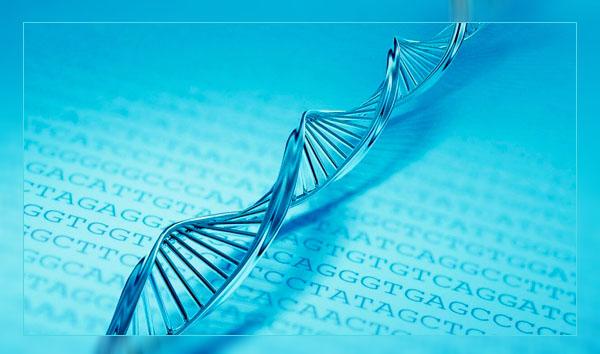 Фото. Под прицелом науки - ДНК
