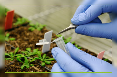 Фото. EFSA продолжает лоббировать ГМО