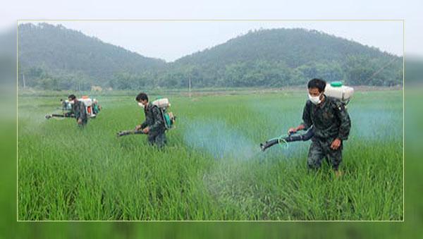 Фото. Распыление Глифосата на ГМО культуры