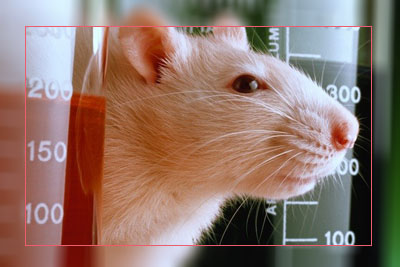 Фото. Вот он, пожиратель ГМО