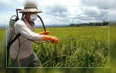 Фото. Распыление пестицидов на полях с ГМО