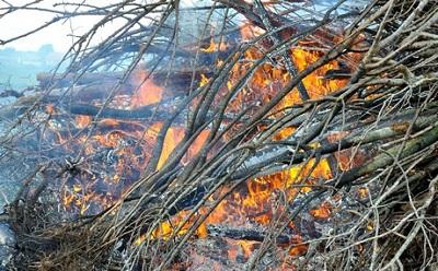 Фото. Новый ракурс при сжигании деревьев
