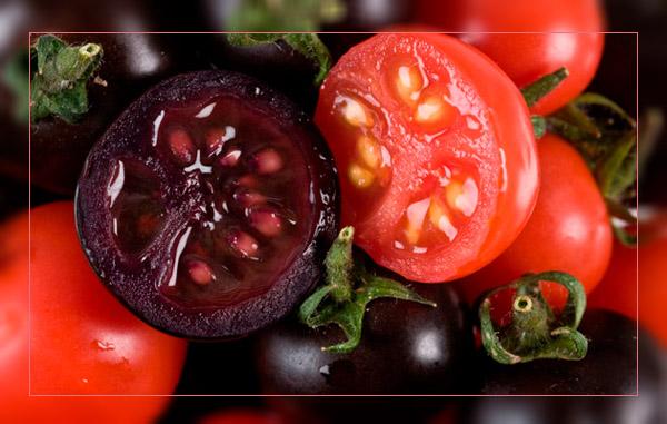Фото. Фиолетовый ГМО картофель