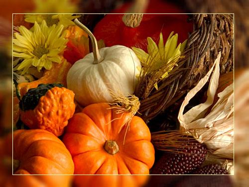 Фото. Какие из этих продуктов нужно отнести к ГМО?