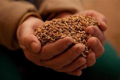Фото. Купите Христа ради, ГМО!