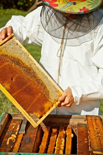 Фото. Получение меда