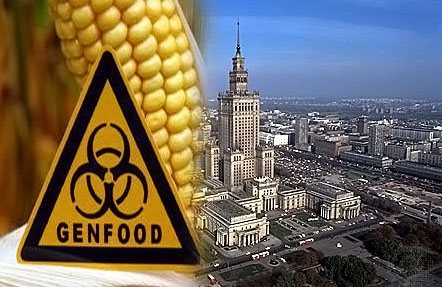 Фото. Польша и ГМО