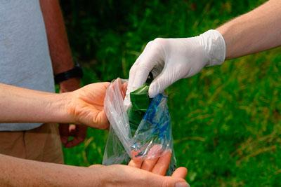 Фото. Тестирование ГМО кукурузы