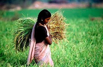 Фото. Индия и урожай