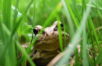 Фото. Пестициды и лягушки