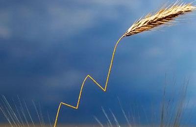 Фото. ГМО урожай