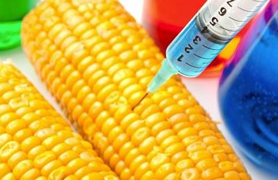 Фото. Интервью о ГМО