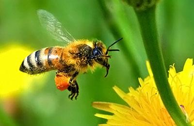 Фото. Исследование пчел