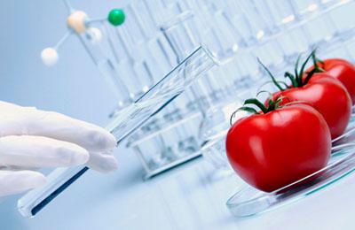 Фото. Испания и ГМО