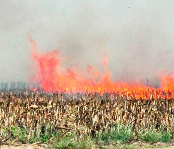 Фото. Горит посев ГМО в Венгрии
