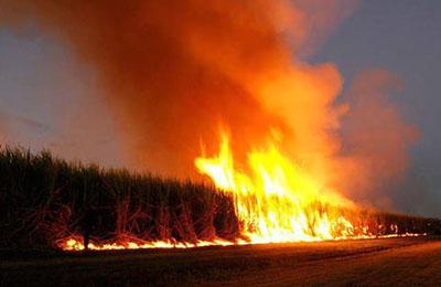 Фото. ГМО и Венгрия