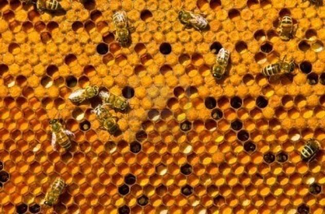 Фото. Гибнут пчелы