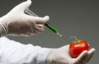 Фото. Модифицированный томат