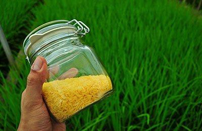 Фото. Золотой рис в банке