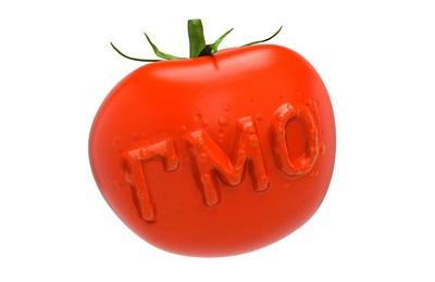 Фото. Модифицированный помидор